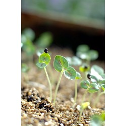How to germinate your seeds
